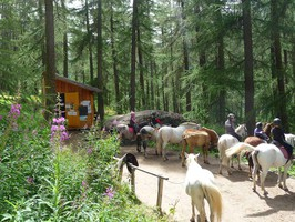 espace ludique queyras - molines - saint - veran - équitation
